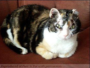 Отважная кошка Скарлетт