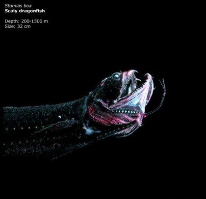 Фотографии глубоководных существ из книги Claire Nouvian The Deep