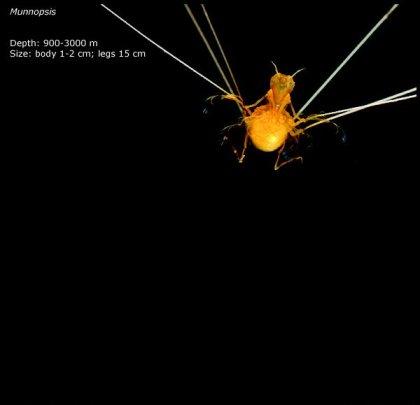 Фотографии глубоководных существ из книги Claire Nouvian The Deep.