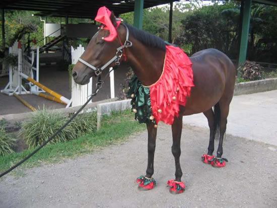 Наряд для любимой лошадки