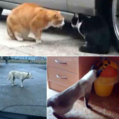 Подборка видеороликов про животных