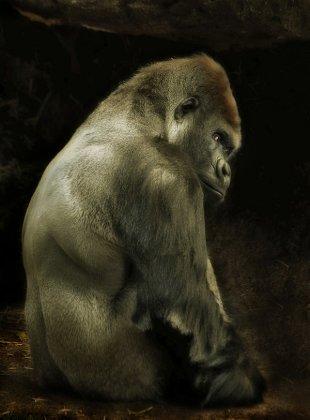 Интересные мифы о животных