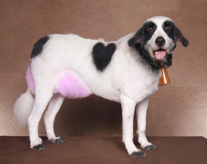 Забавные стрижки собак