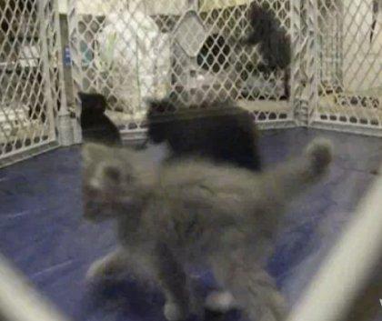 Кошачий поп-корн