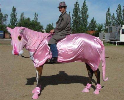 Лошадиные наряды