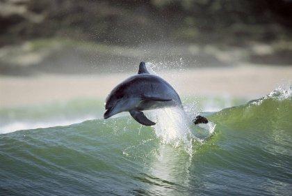 На гребне волны: дельфины