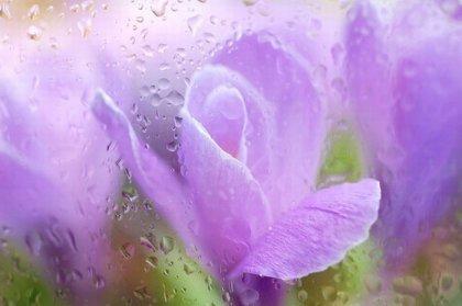 Цветы от Татьяны Макушиной