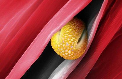 Пыльца под микроскопом от Martin Oeggerli