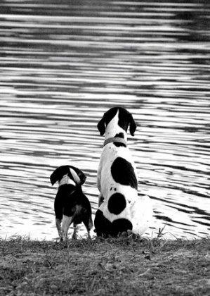Собаки бывают разные... (часть 1)
