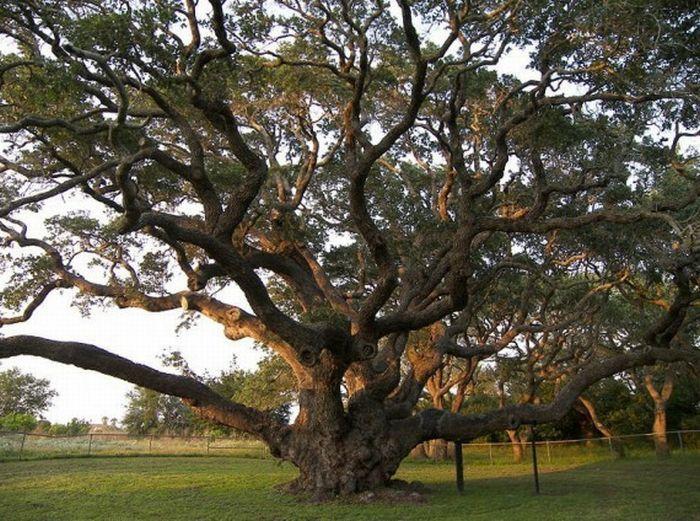 Breathtaking oak tree vector images