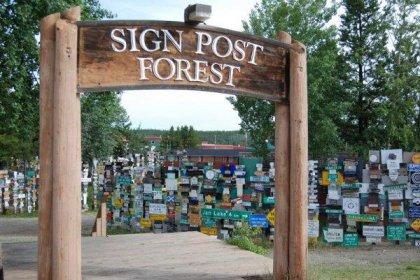 Лес из дорожных знаков