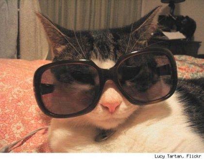 Домашние животные в солнечных очках