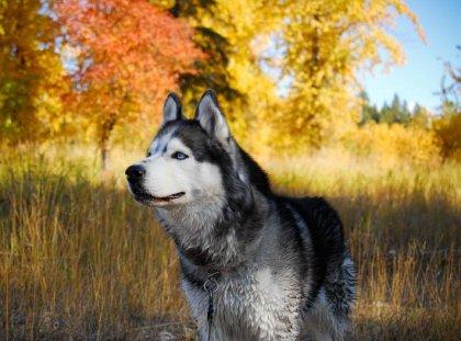 Собаки бывают разные... (часть 2)