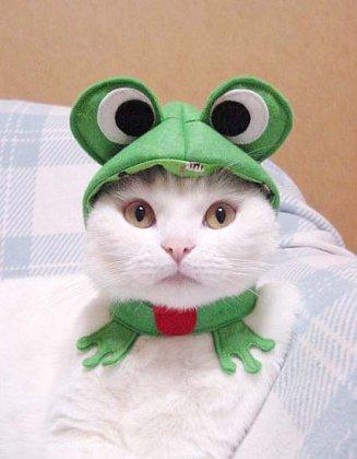 Кошачьи наряды