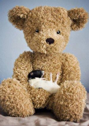 Чудесные крысёныши от Jessica Florence