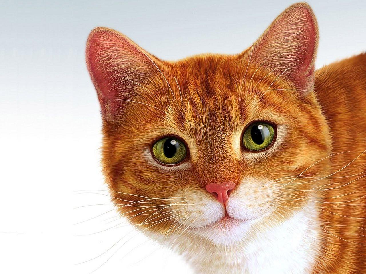 Рыжие коты видео бесплатно