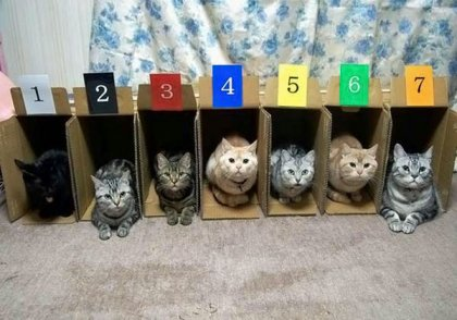 Эти забавные кошаки! (часть 2)