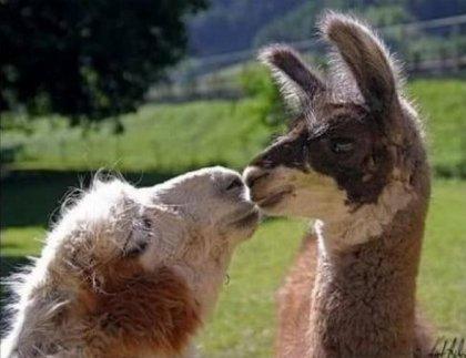 Поцелуи животных