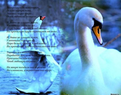 Лебединая верность