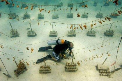 Подводная плантация кораллов