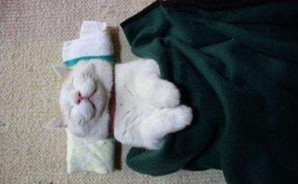 Самый ленивый кот в мире