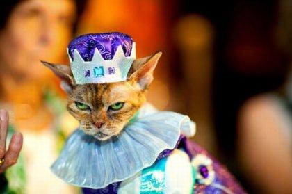 Выставка нарядных кошек