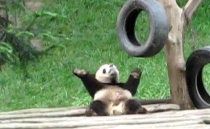 Панда-брейкдансер