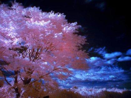 Красивые инфракрасные фотографии (Часть 2)