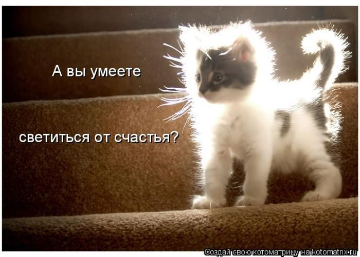 http://www.bugaga.ru/uploads/posts/2010-09/1284943003_kotomatrix-4.jpg