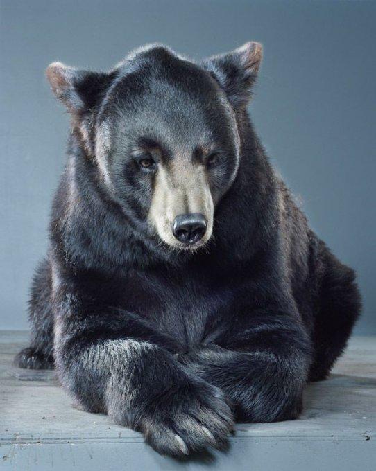 нарисованные медвежата картинки