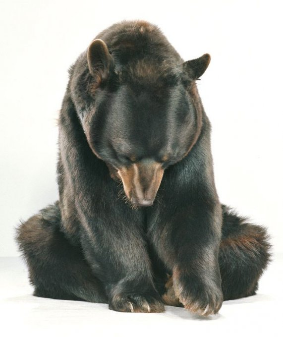 медвежата нарисованные картинки