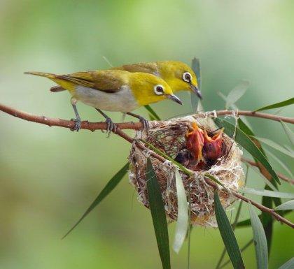 Фото птенцов