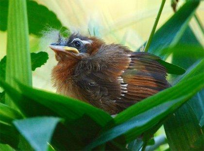 25 очаровательных фотографий птенцов.
