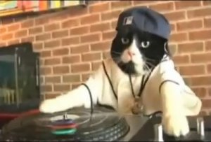 Dj Kitty