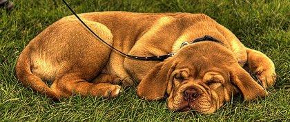 Красивые HDR фото животных