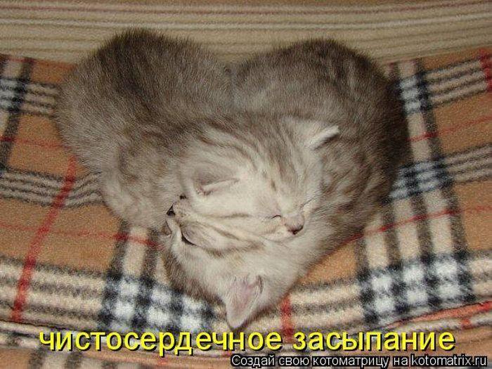 http://www.bugaga.ru/uploads/posts/2010-10/1286148911_kotomatrix-4.jpg
