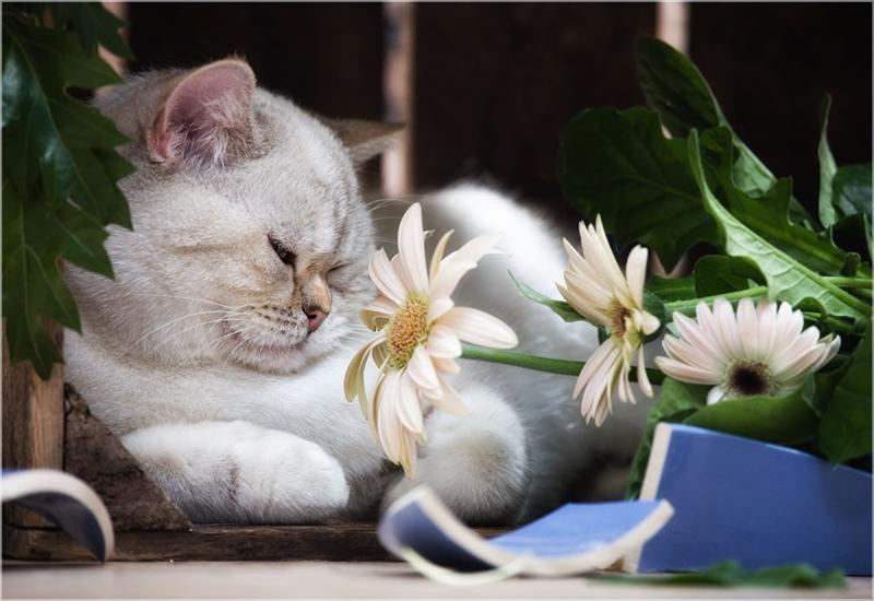 хорошего вечера кошки картинки