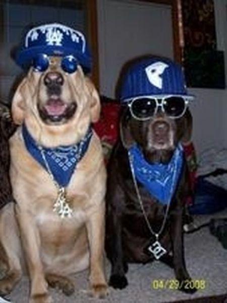 http://www.bugaga.ru/uploads/posts/2010-10/1286856443_gangsta-dogs-4.jpg