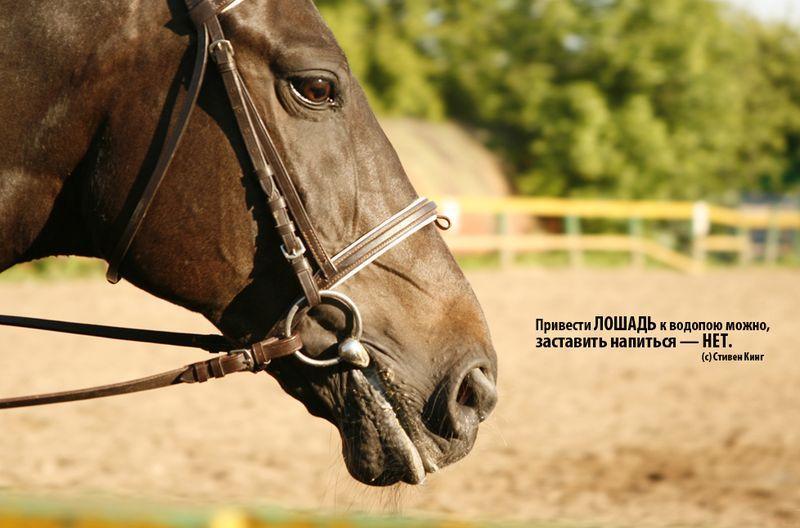 Картинки коней с надписями, рождения сосиски смешные