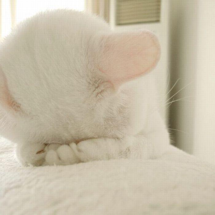 Котик кавай картинки