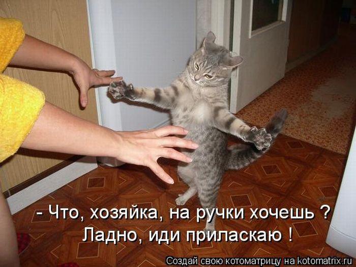 http://www.bugaga.ru/uploads/posts/2010-10/1288353535_kotomatritsa-14.jpg