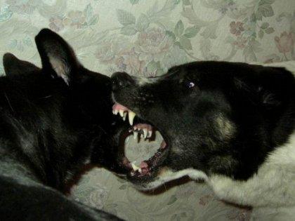 Всем кто любит собак