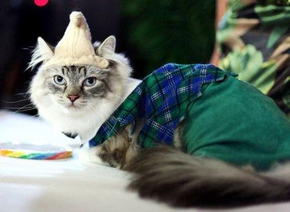 Сказочные наряды для кошек