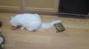 Черепашка атакует