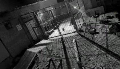 Стая волков сбежала из клетки!