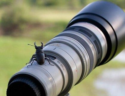 Животные и фотокамеры