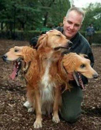 http://www.bugaga.ru/uploads/posts/2010-10/thumbs/1287996758_350x449_dogs-halloween.jpg