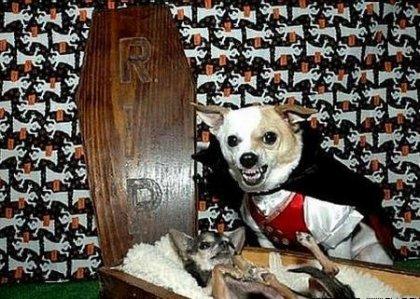 http://www.bugaga.ru/uploads/posts/2010-10/thumbs/1287996927_450x321_dogs-halloween.jpg