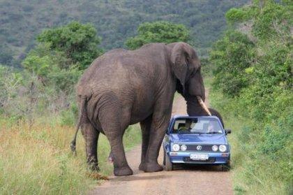 Животные против автомобилей