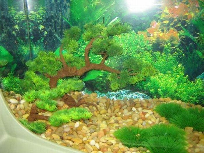 Как использовать пустой аквариум идеи фото